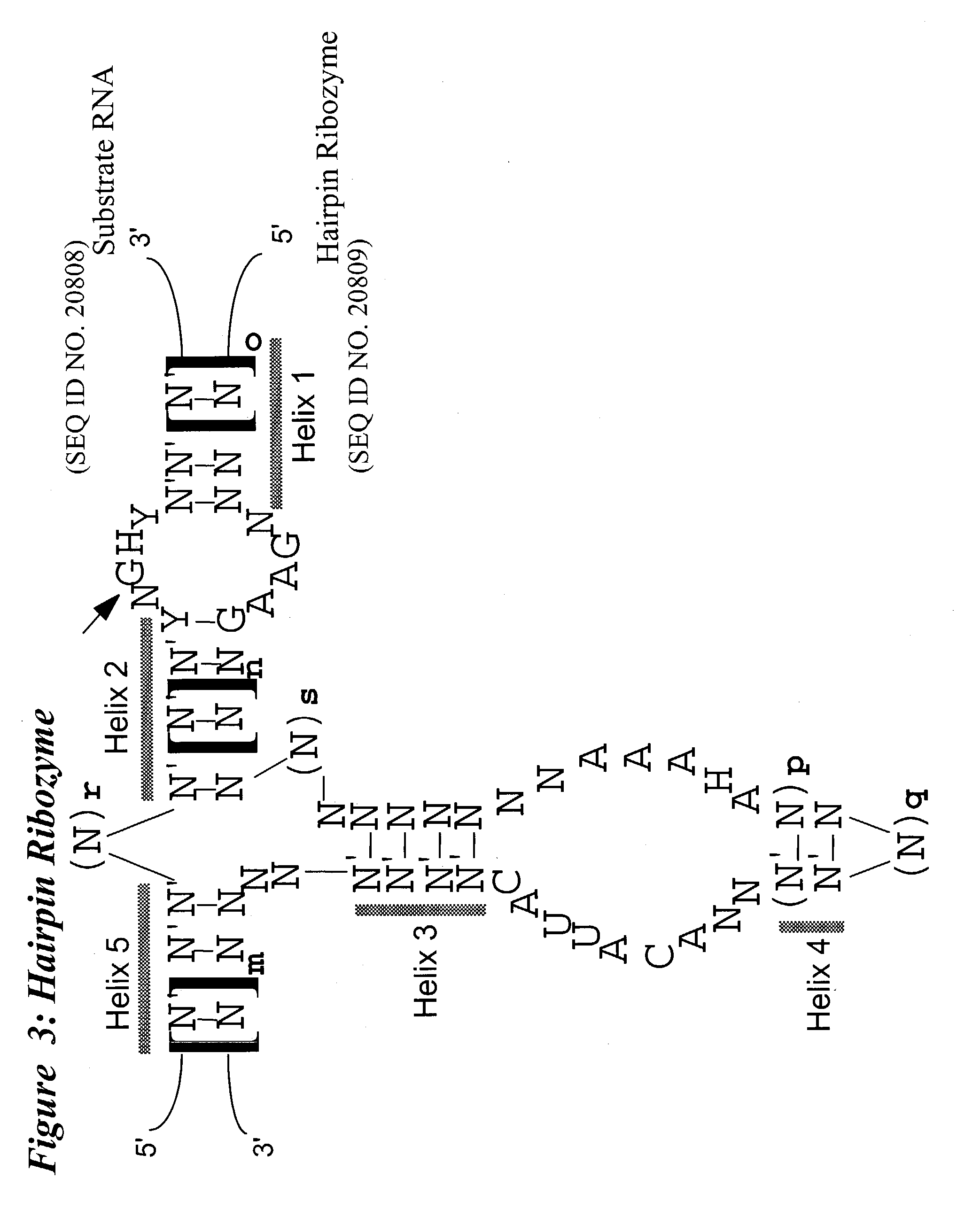 Us20040102389a1 Nucleic Acid Mediated Treatment Of Diseases Or Mtd Wiring Diagram 929 1072 Conditions Related To Levels Vascular Endothelial Growth Factor Receptor Vegf R