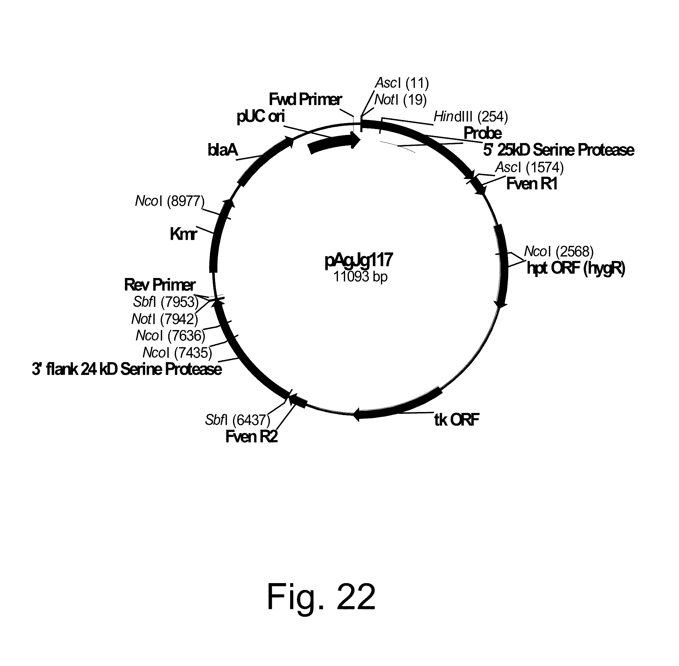 US8986974B2 - Methods for producing polypeptidies in protease ...