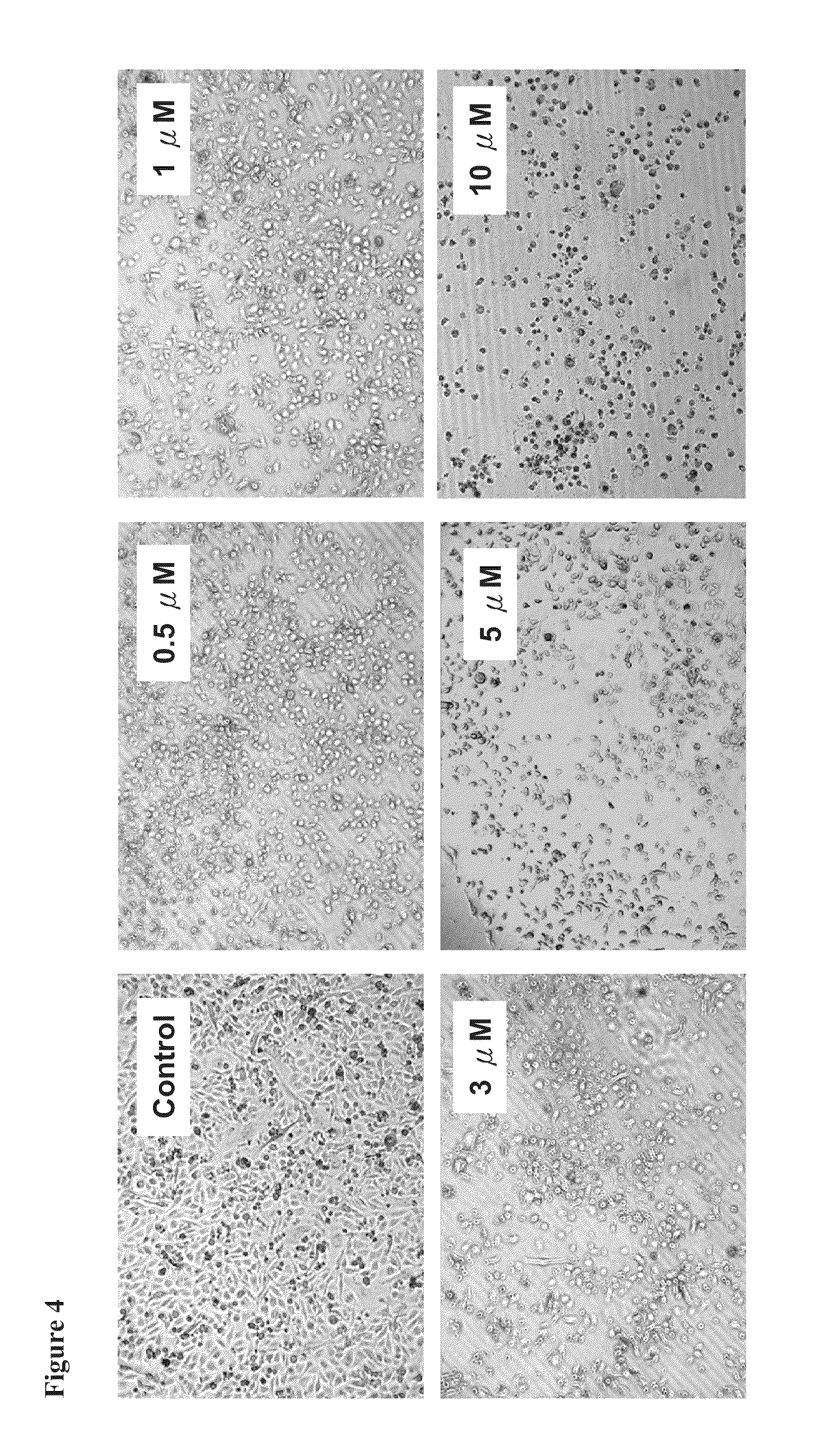 US20110263700A1 - Antrocin containing pharmaceutical