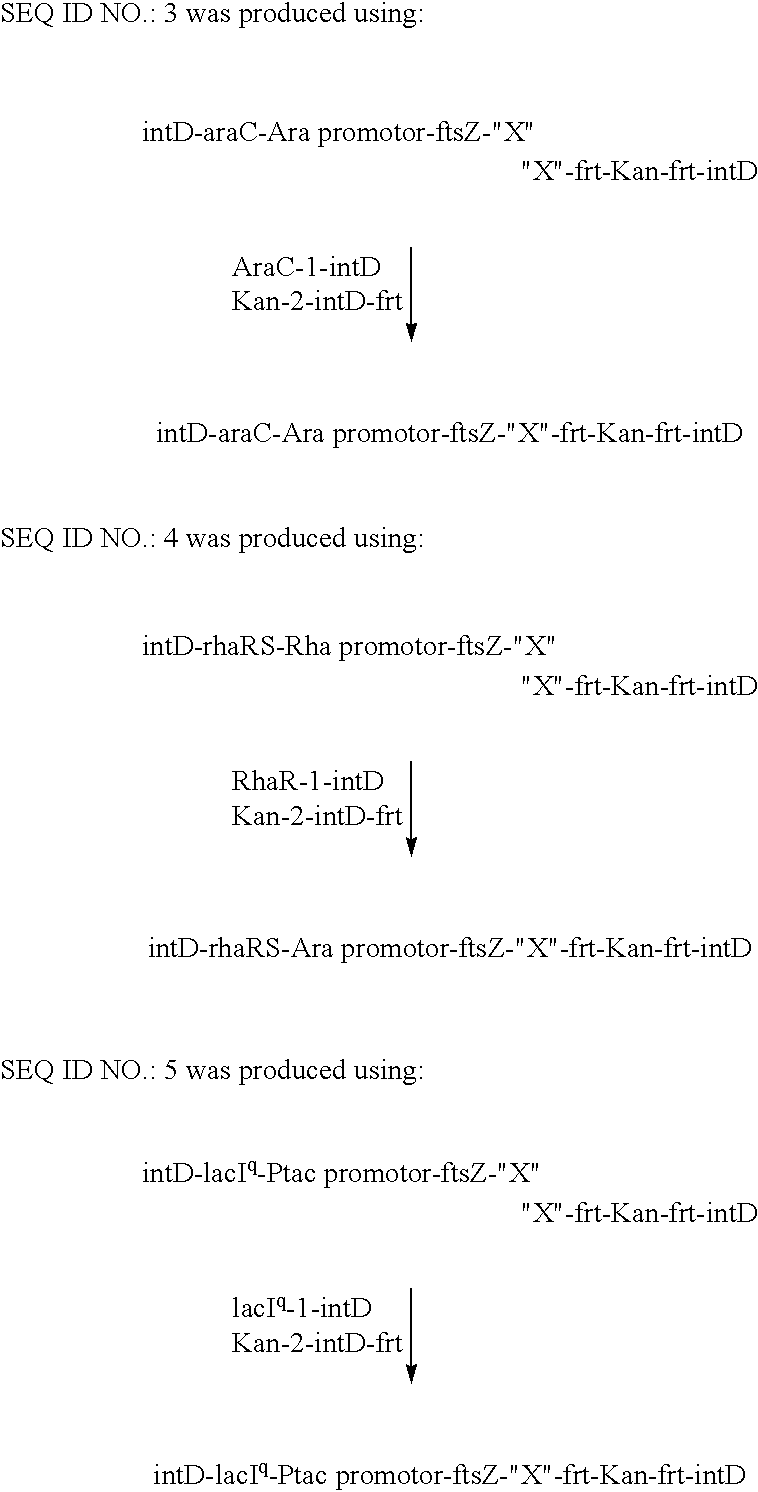 US20030199005A1 - Solid supports with minicells - Google Patents