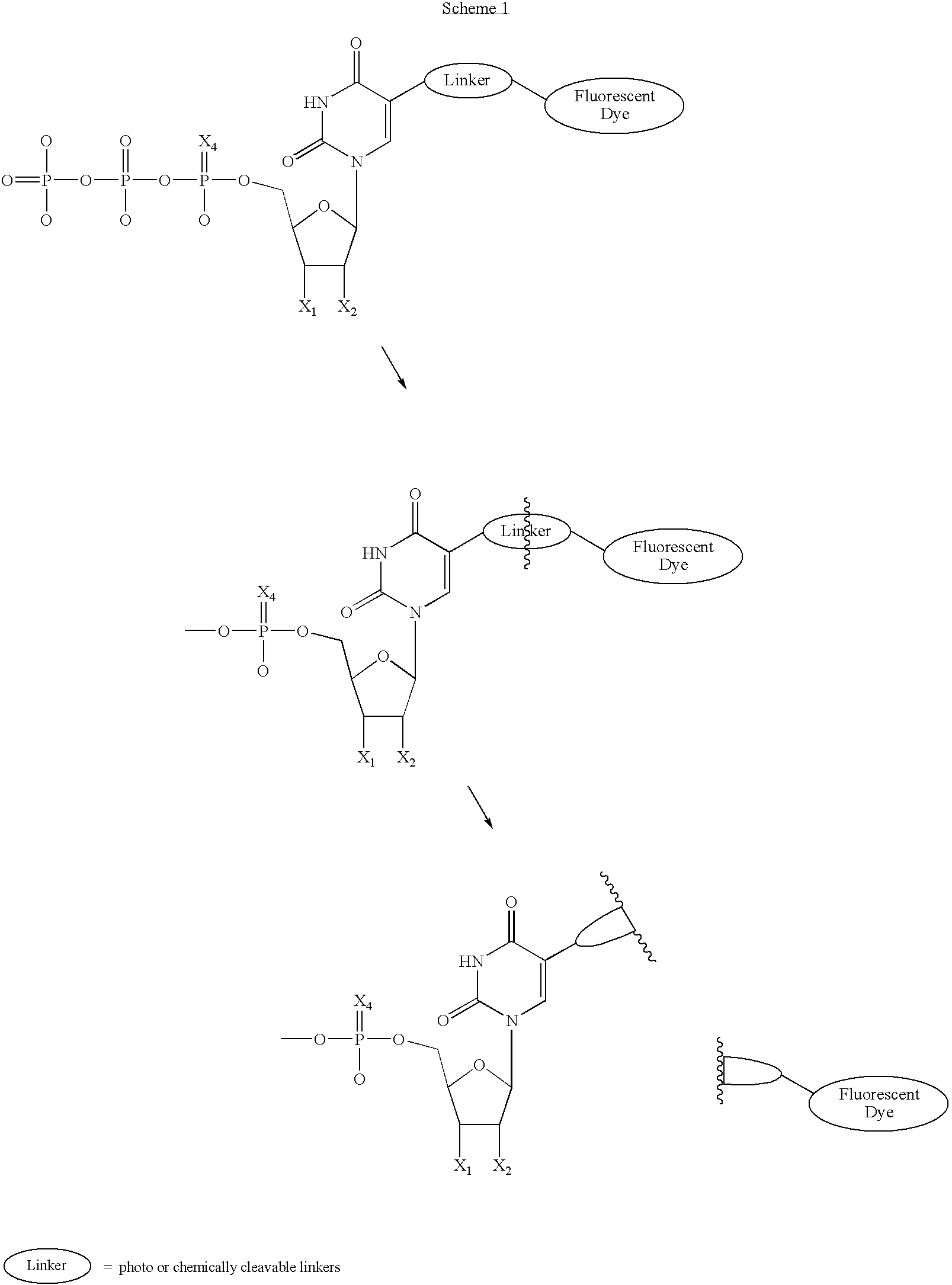Figure US20070117104A1-20070524-C00003