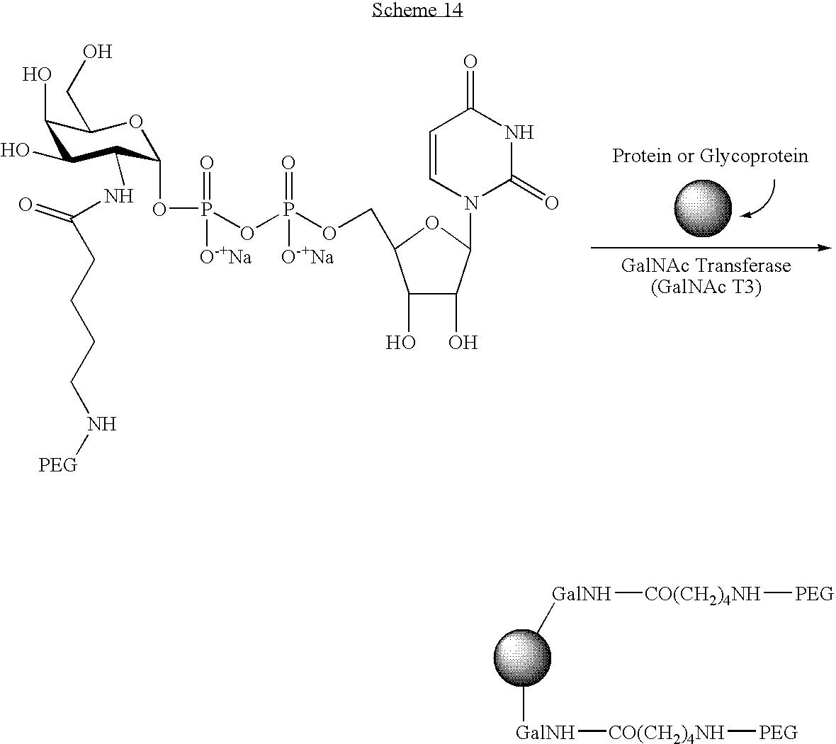 Figure US20040115168A1-20040617-C00119
