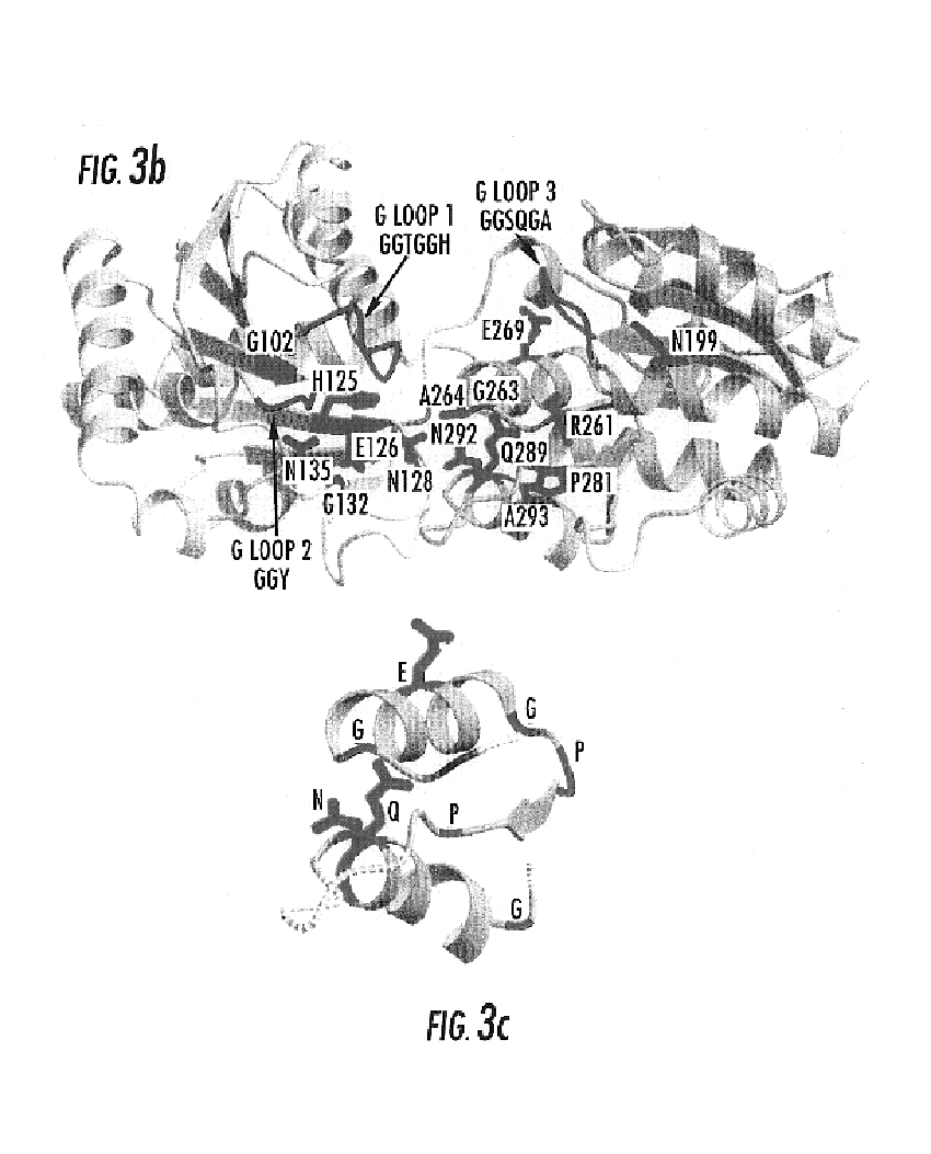US6921653B2 - Crystalline UDP-glycosyl transferase (MurG) and methods of  use thereof - Google Patents 8241ab2a3