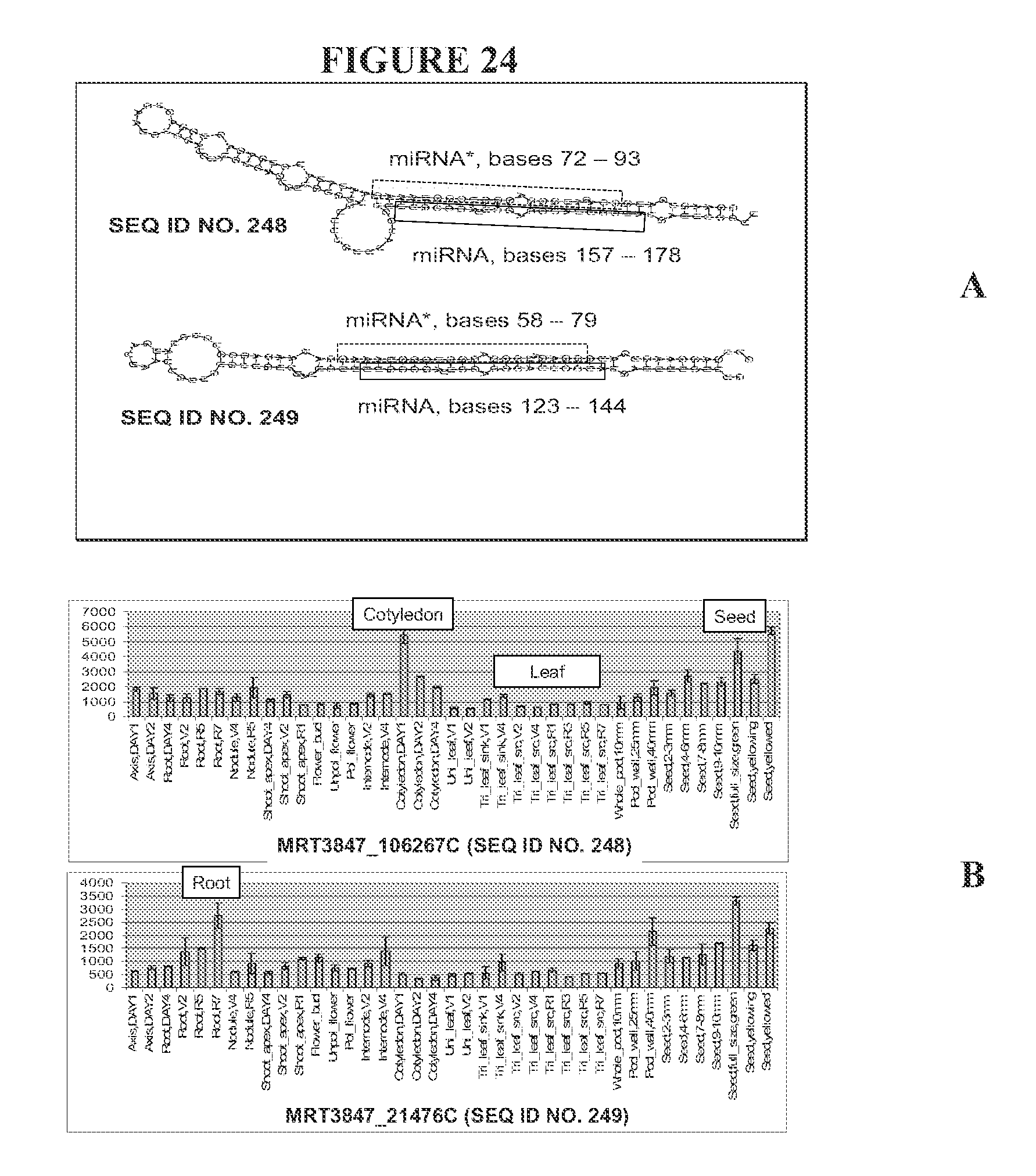 Ams Sugar Ii Set 339 us8395023b2 - recombinant dna constructs and methods for