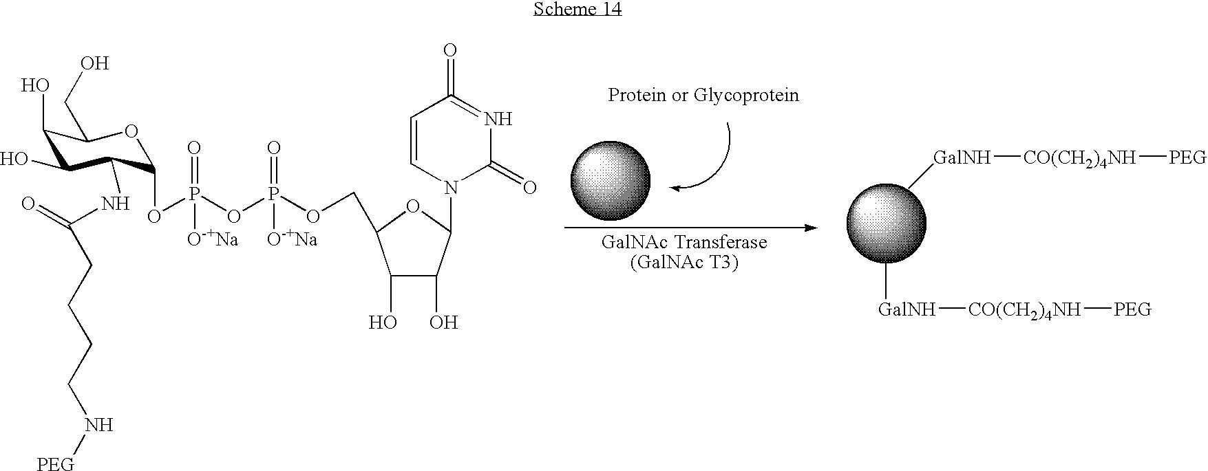 Figure US07439043-20081021-C00112