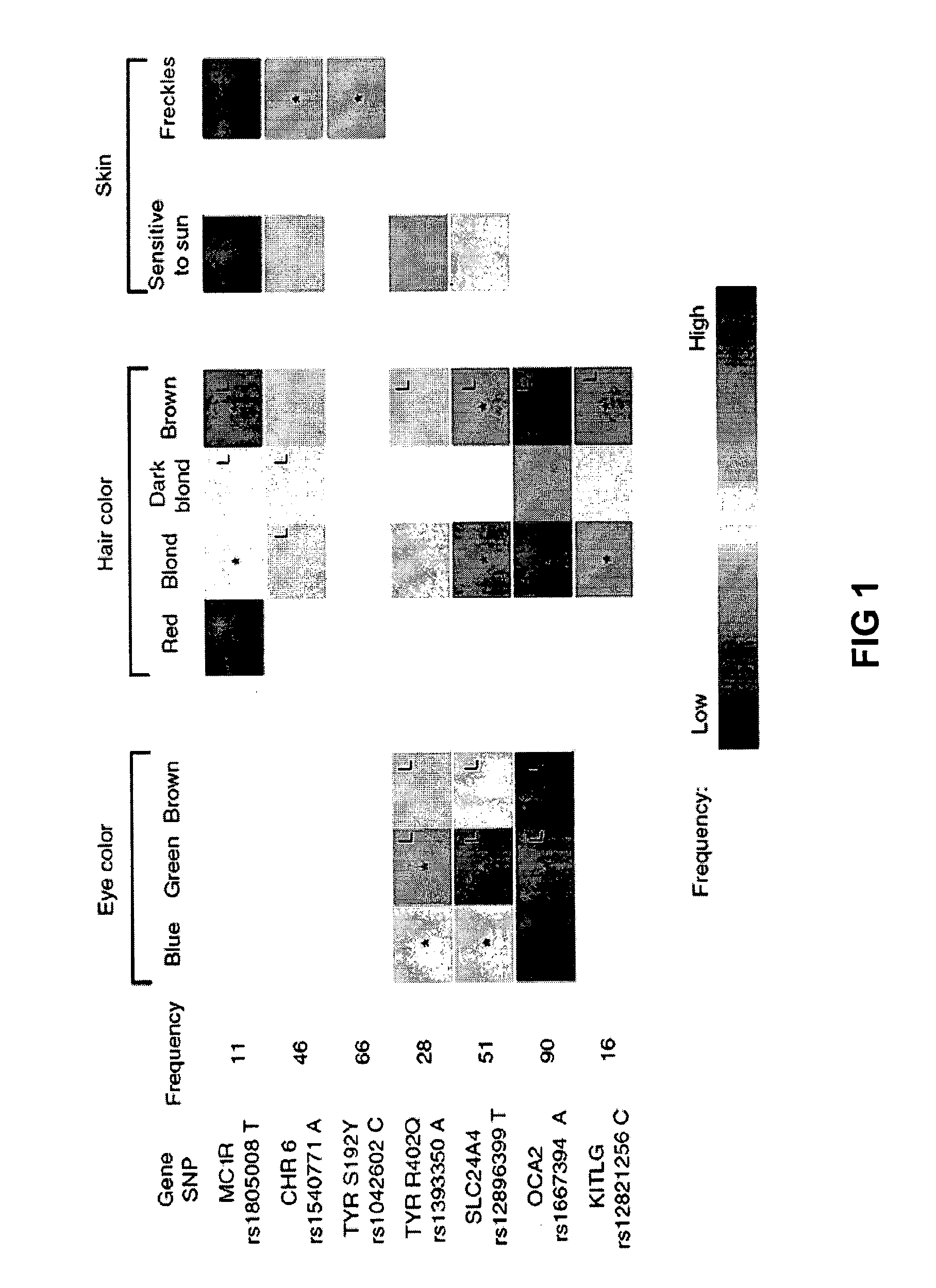 US20100216655A1 - Sequence variants for inferring human