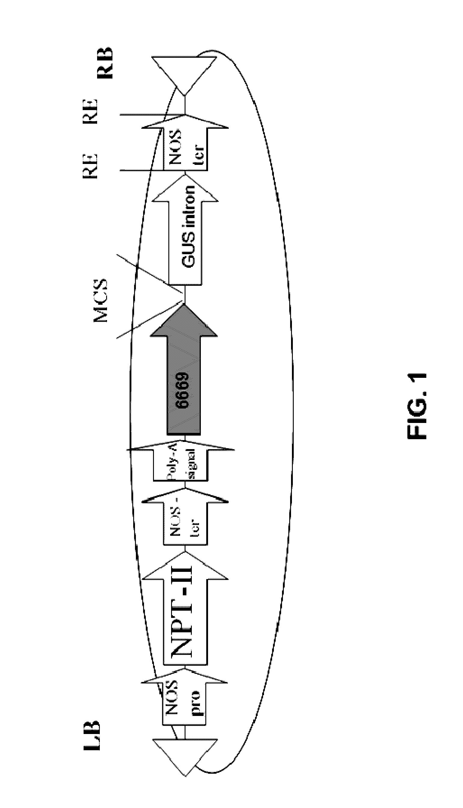 US9487795B2 - Isolated polynucleotides and polypeptides, and