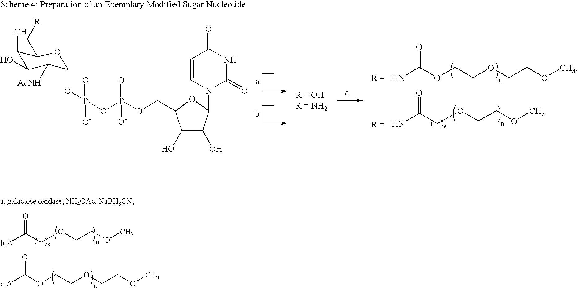 Figure US20080242607A1-20081002-C00037