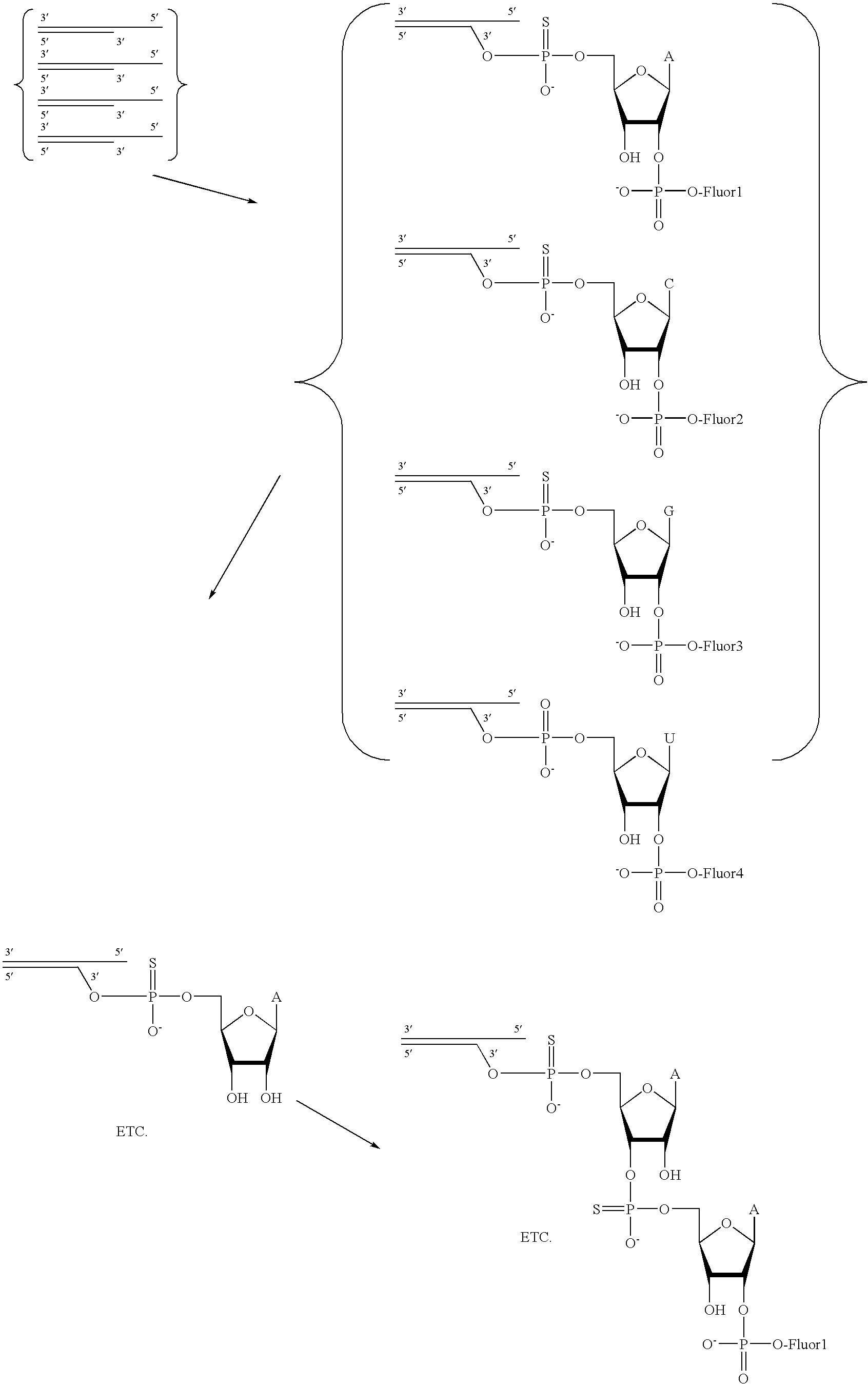 Figure US20080293071A1-20081127-C00009