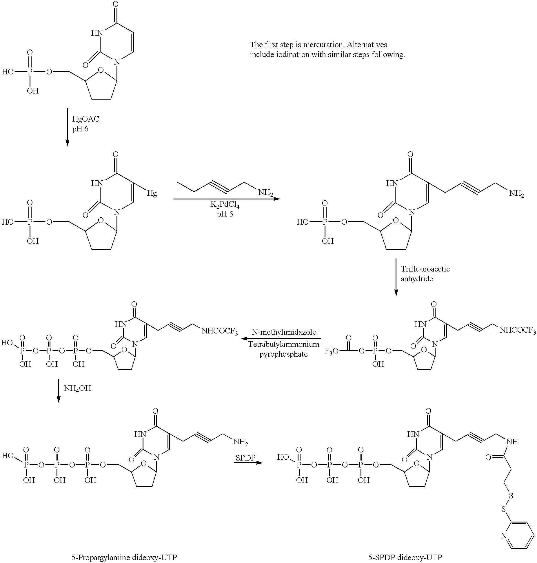 Figure US06232103-20010515-C00005