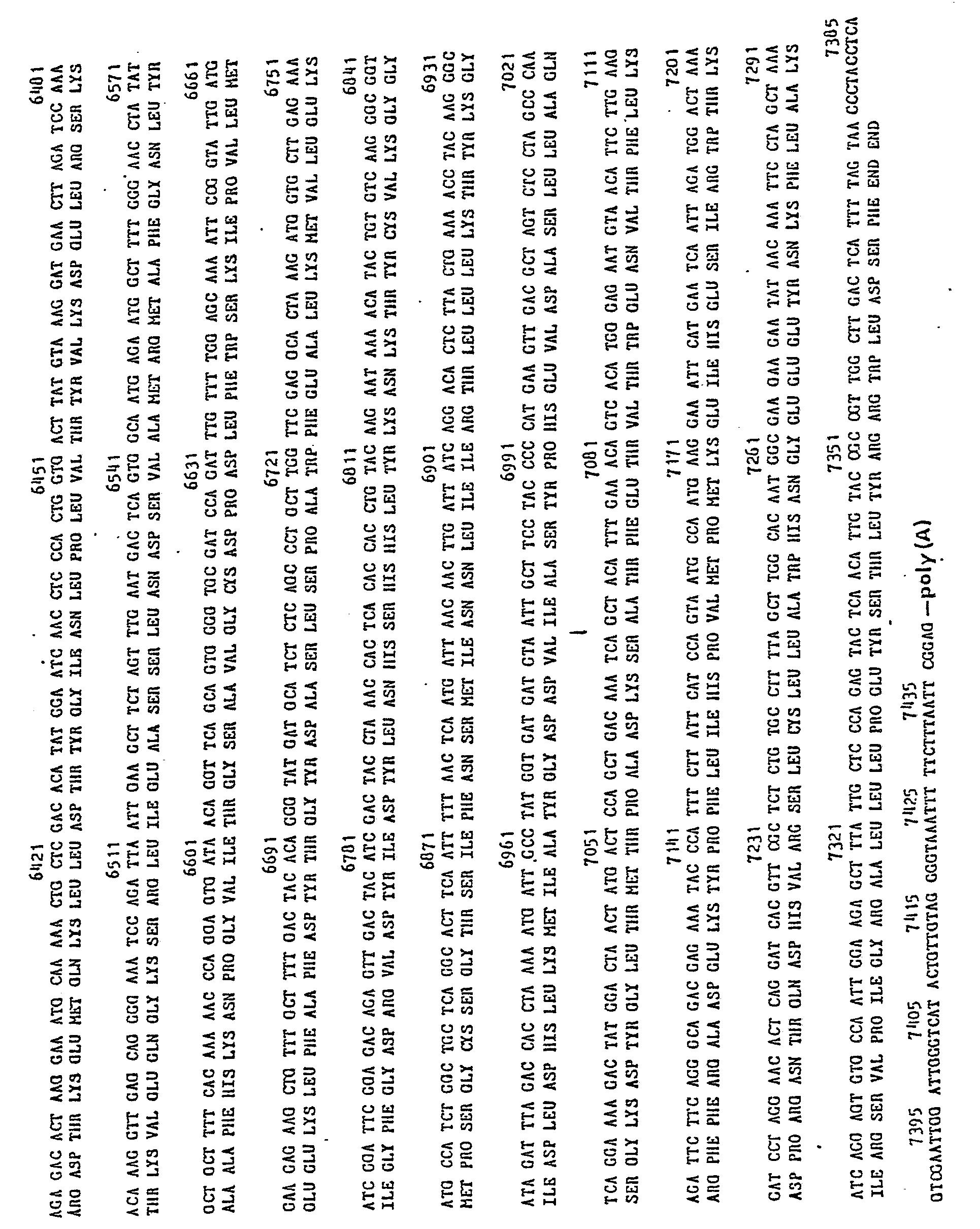 WO1982003632A1 - cDNA REPRESENTING RNA VIRAL SEQUENCES - Google Patents