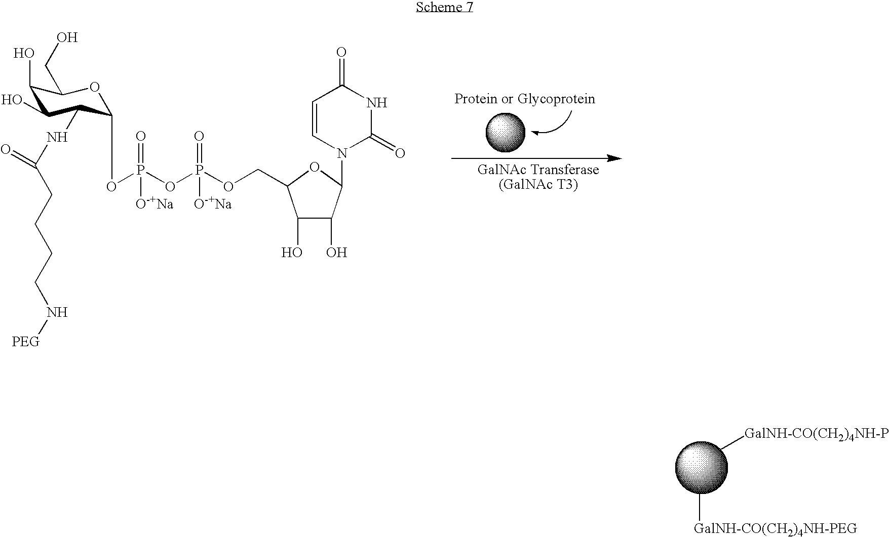 Figure US07932364-20110426-C00027