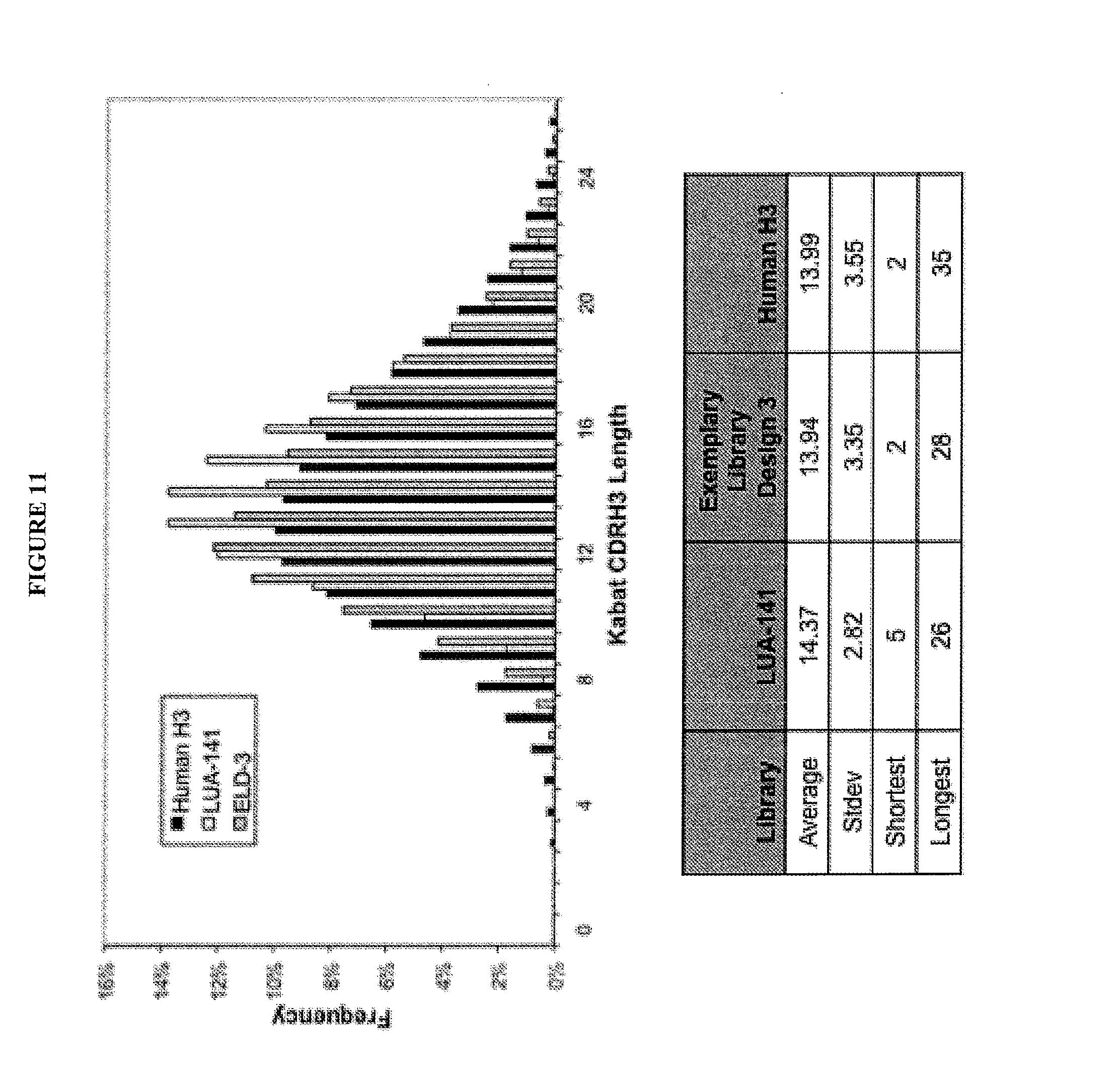 US20130197201A1 - Antibody libraries - Google Patents