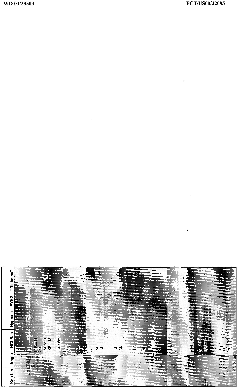 f88cd9f7d210 WO2001038503A2 - Novel human protein kinases and protein kinase-like ...