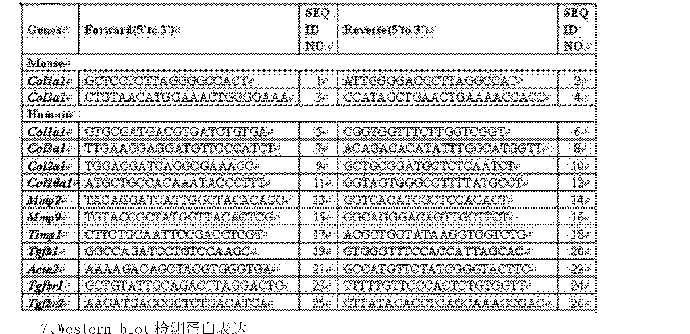 CN104127403A - Application of flavonoid quercetin in