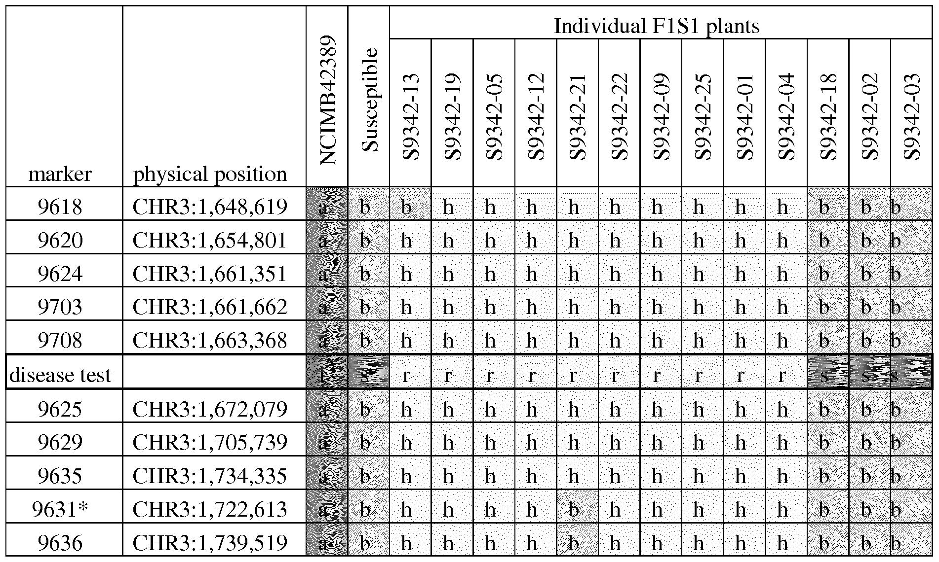 WO2017144077A1 - Powdery mildew resistance genes in carrot