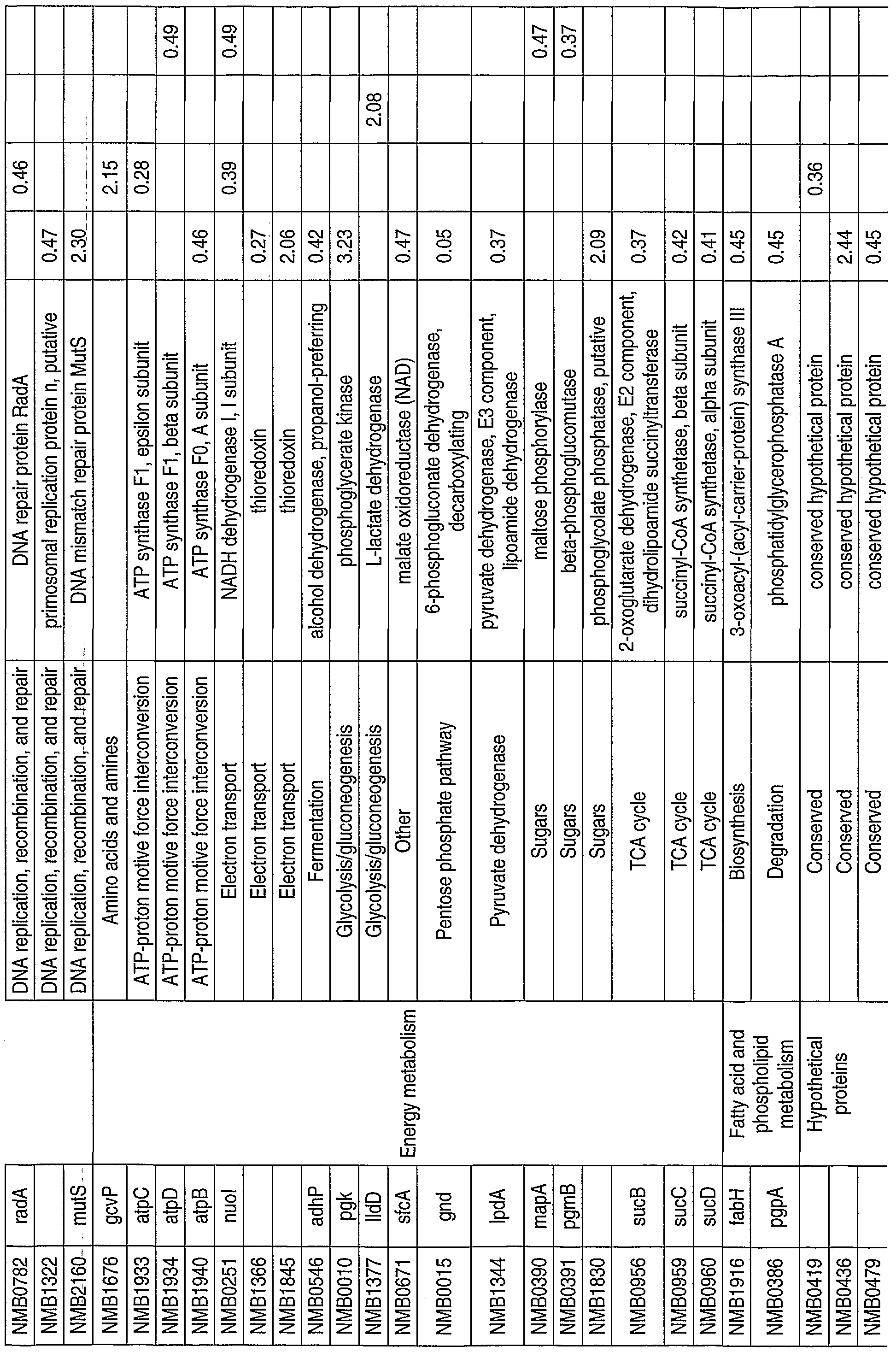 WO2002102843A2 - Gene expression during meningococcus