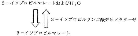 3-イソプロピルリンゴ酸デヒドラターゼ - 3-Isopropylmalate ...