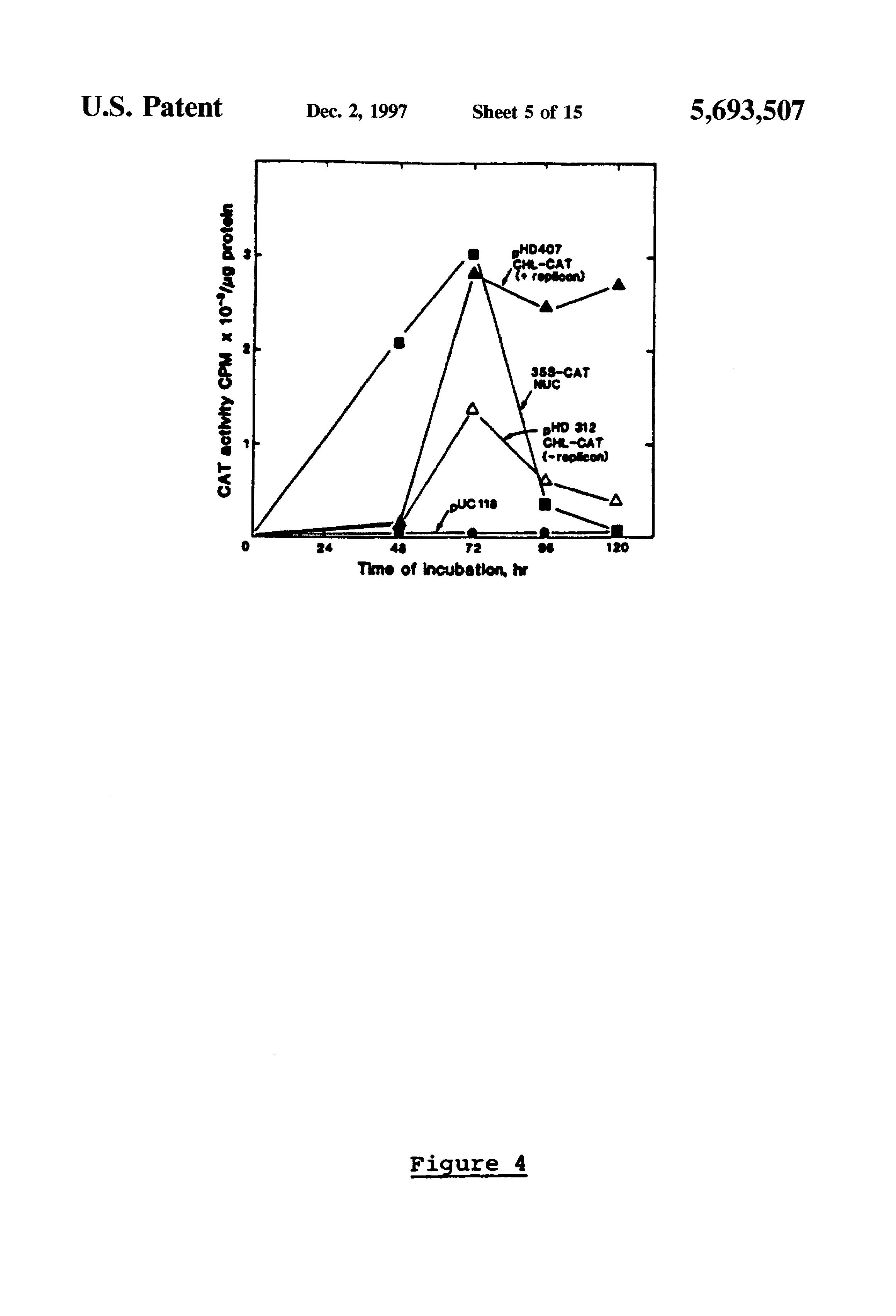 patent us5693507