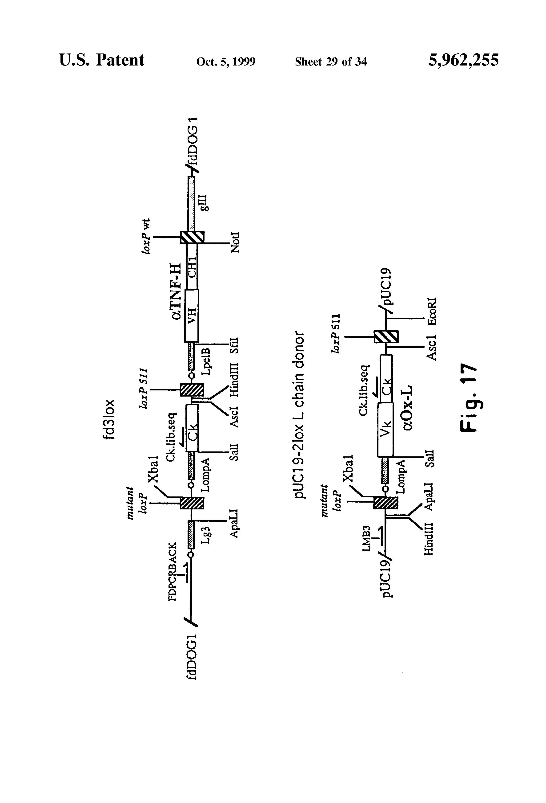 patent us  methods for producing recombinant vectors, wiring diagram